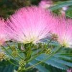 Flori de Matase
