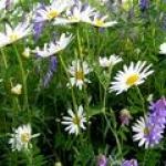 Flori Salbatice