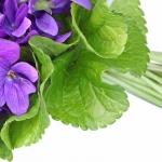 Frunze de Violeta